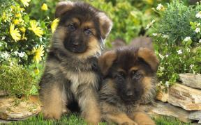 Дрессировка и воспитание собак Киев