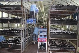 Работа в Польше на выращивании и сборе грибов