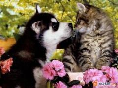 Ветеринарная помощь на дому - скорая помощь, диагностика,вызов