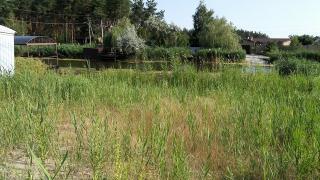 Земельный участок в сосновом лесу на берегу реки Самара